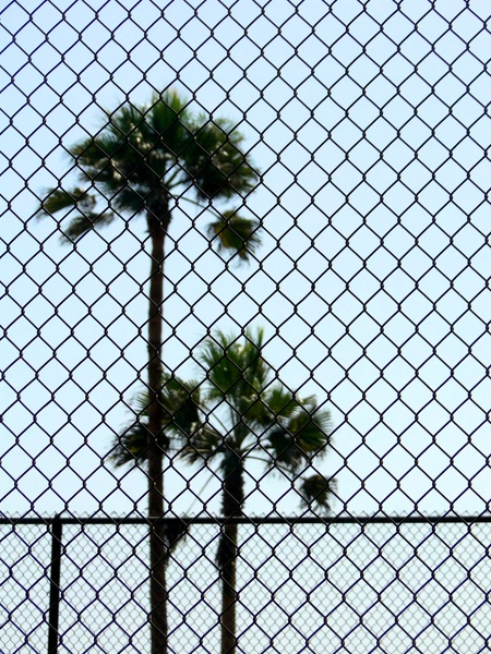 Palm tree and fence
