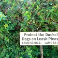 Protect the Ducks !